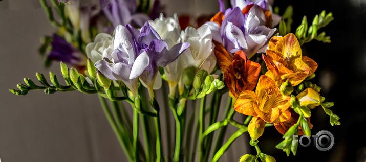 ziediņi