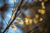 Ikgadēja Pavasara pastaiga laukos