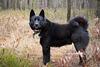 Suņa portrets vietā, kur vislabāk (mežā)