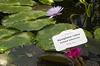 LU Botāniskajā dārzā un ne tikai